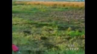 Aend Ethiopia Gojjam ጎጃም Video 25