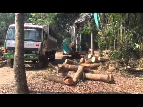 Thanh Tâm phugiao. Chuyen mua bán và khai thác gỗ 0968 644 655