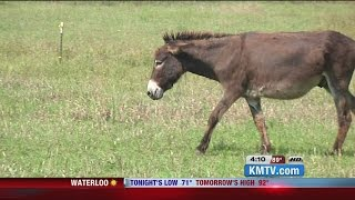 Donkey rescue helps forgotten equines