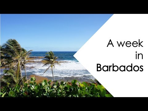 A WEEK IN BARBADOS | CARIBBEAN | Claire Imaginarium