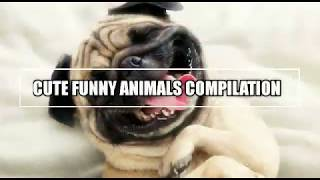 Best Cute Funny Animals Compilation