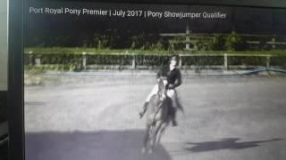 landlord iii qualifying hoys pony show jumper