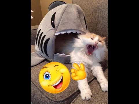 SUPER FUNNY Cats Fails and Moments Compilation 😂  Try Not To Laugh! 👍