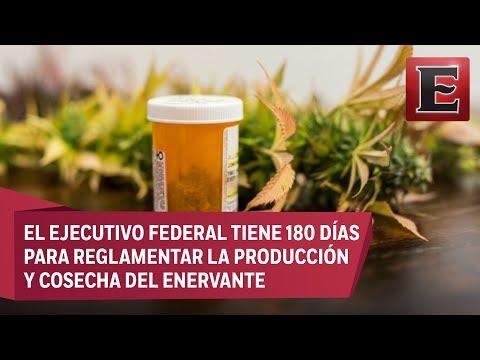 En México la marihuana de uso medicinal ya es legal