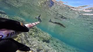 Zıpkınla Balık Avı (karışık)