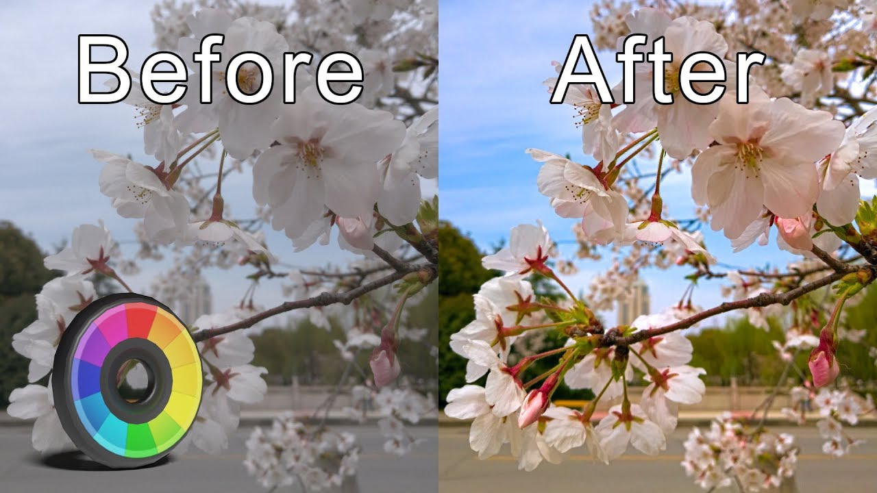 Best Free Alternatives to Photoshop and Lightroom - Yatharth