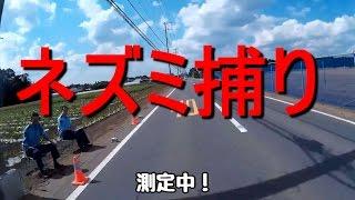 ネズミ捕り・速度取締り、千葉県八街市