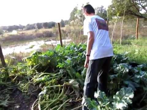 Doomsday Preppers: Garden Survival - YouTube
