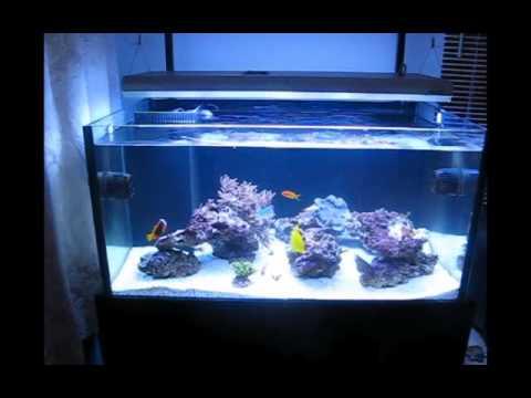 Rimless Braceless Sps Reef Tank Youtube