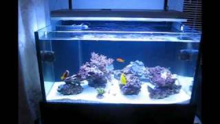 Rimless Braceless Sps Reef Tank