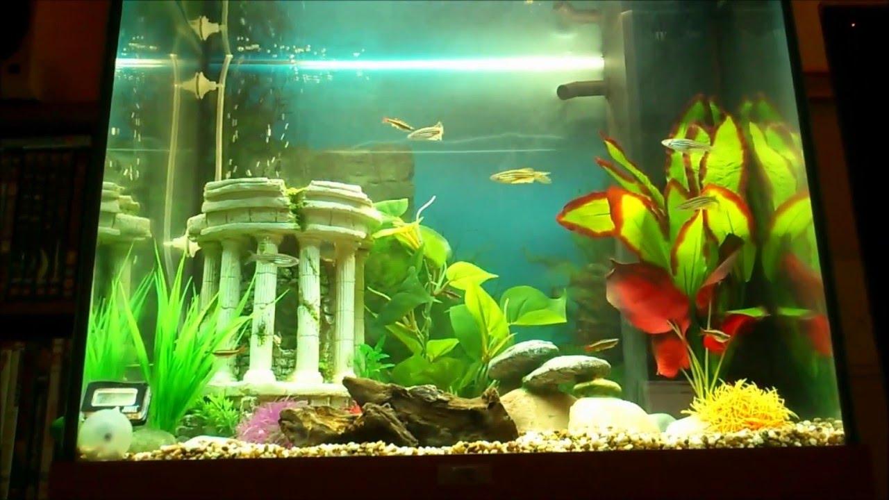 juwel lido 120 litre aquarium youtube. Black Bedroom Furniture Sets. Home Design Ideas
