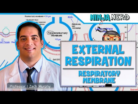 Respiratory | External Respiration: Thickness & Surface Area Of Respiratory Membrane | Part 2
