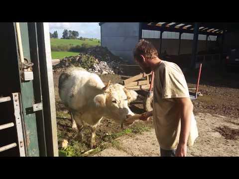 Pk la vache qui rie elle rie
