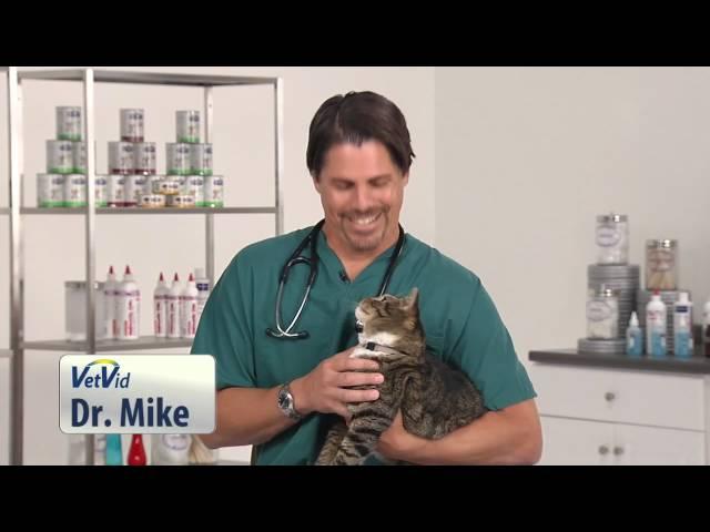 Funny Cat Talking