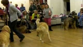 2011 Findon Downs Dog Training Club Party