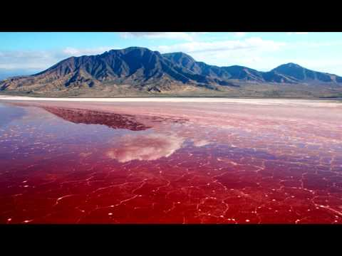 What causes Red Tides?