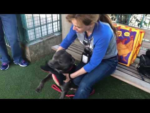 3 years at the shelter: a pitbull wants to go home