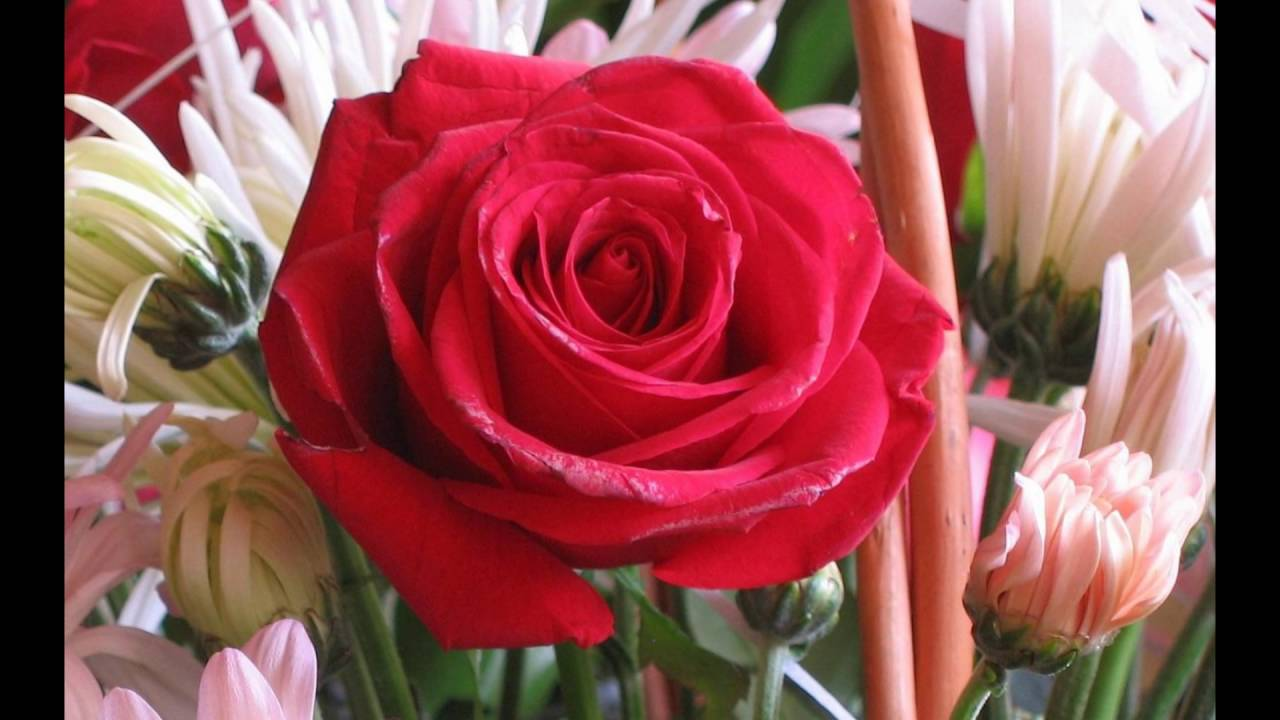 Roses Flower Love Youtube