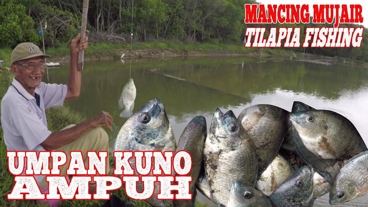 Download MANCING MUJAIR : PAKAI UMPAN KUNO INI AMPUH / Traditional Tilapia Fishing