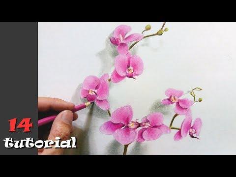 Как нарисовать цветы поэтапно карандашом для начинающих
