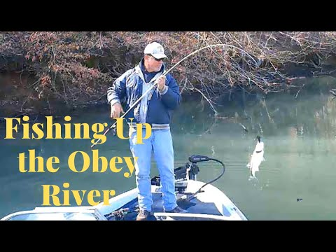 Fishing Up The Obey River On Dale Hollow Lake