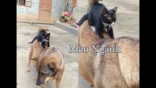 Mèo Massage Chuyên Nghiệp Bao Phê Con Tê Tê 👉 Cats Funny And Dog Funny 👍 Cats TV