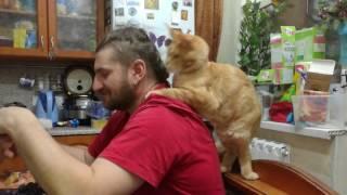 Кот Мейн кун кушает хозяина )))