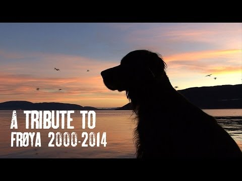 Tribute To Frøya, 2000 - 2014. R I P By Kristoffer Clausen