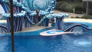 Orlando Florida 2013 - Sea World Blue Horizons DOLPHIN SHOW[IN HD]! Panasonic V720 Camcorder