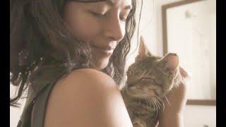 Street Cat Rescue: Kitten Season