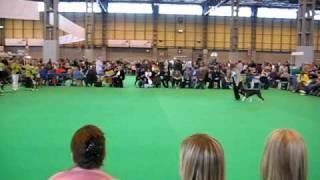 Hembadoon Boxers - DFS Crufts 2010 - Edna.AVI