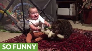 Baby and puppy battle for stuffed animal dominance