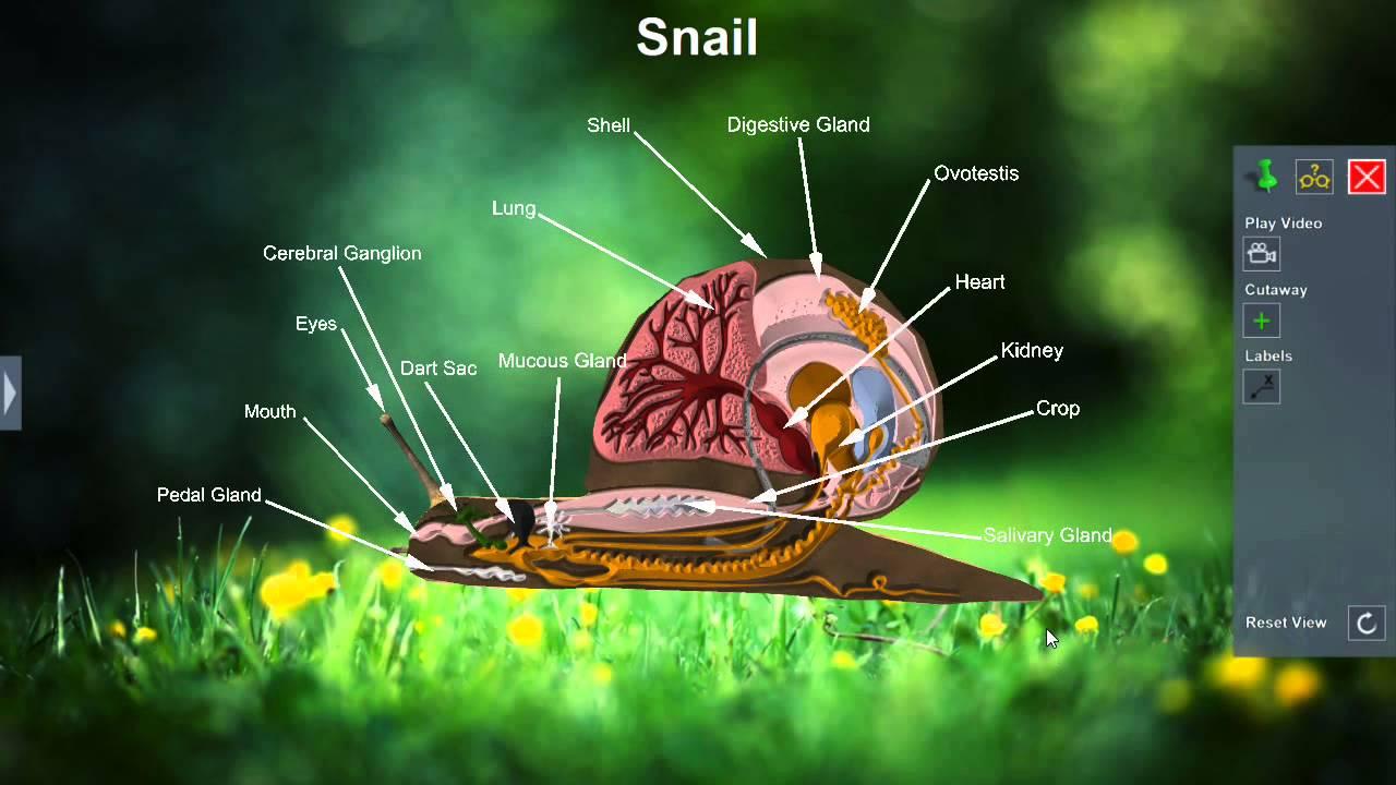 hight resolution of snail habitat diagram