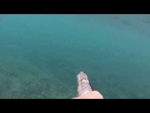 More ribe :D /Scuole di mugggine /school of fish