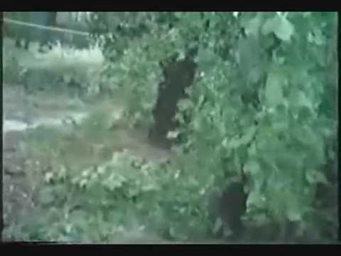 Some Footage after Hurricane Hugo in 1989
