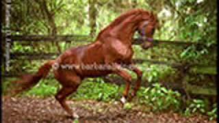 horses going CrAzY