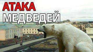 видео: Десятки белых медведей окружили дома на Новой Земле