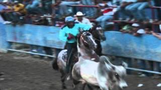 El caballo de las ciento y pico.. se despide del coleo.. thumbnail