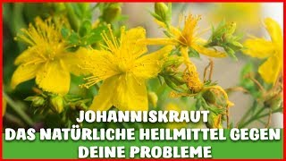 JOHANNISKRAUT - Das wohl beste NATÜRLICHE HEILMITTEL gegen DEPRESSIONEN