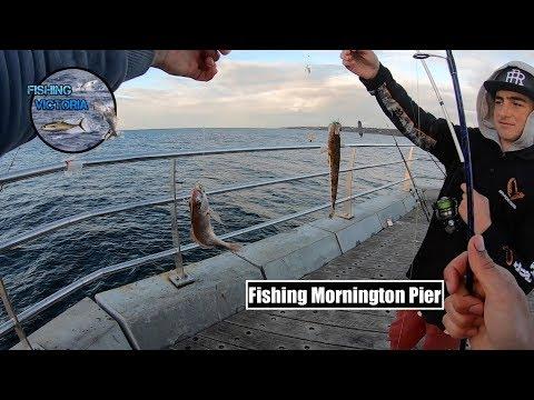Fishing Mornington Pier