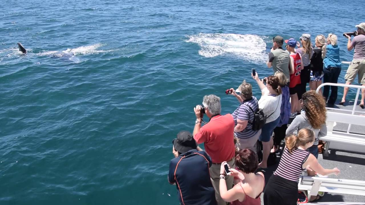 video Half Day Whale Watching Cruise