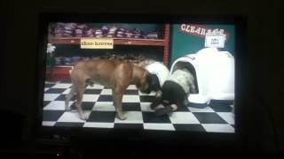 see spot run : pet shop scene