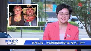 澳洲新闻| 澳洲总理莫里森PK工党领袖薛顿  永居审批时间长 澳移民工人拒签风险增加  离奇车祸!大树倒塌砸中汽车 致女子死亡
