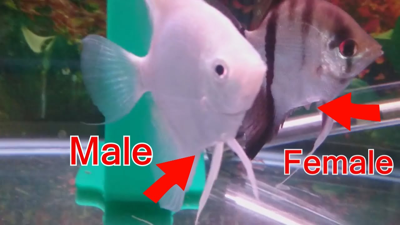 How To Tell The Difference Between Male And Female -3572
