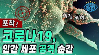 코로나19 바이러스의 실체 [X파일] 1-1 / YTN…