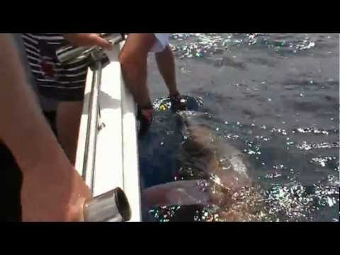 Marlin Fishing Mexico with KK Pono Lures