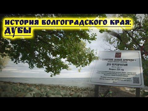 Самые старые Дубы  Волгоградской области
