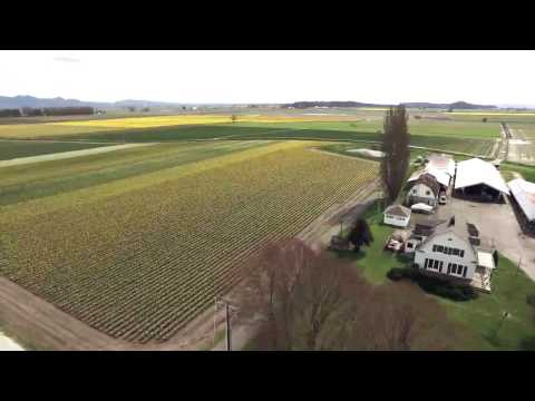 Skagit Flower Farms April 2017