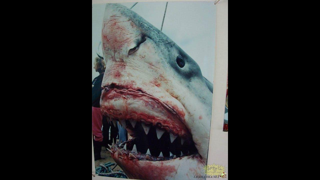 etats unis le plus gros requin jamais p ch info replay youtube. Black Bedroom Furniture Sets. Home Design Ideas