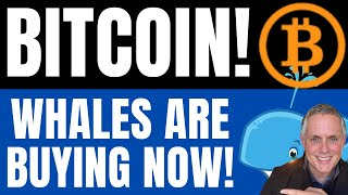 BITCOIN WHALES ARE BUYING NOW! (MASSIVE BITCOIN NEWS!)